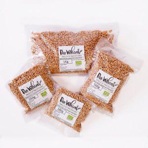 Semillas hierba de trigo