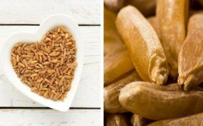 Kamut; el trigo más antiguo y más nutritivo